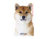 ダーツゲームカード【ダーツライブ】NO.1579 柴犬